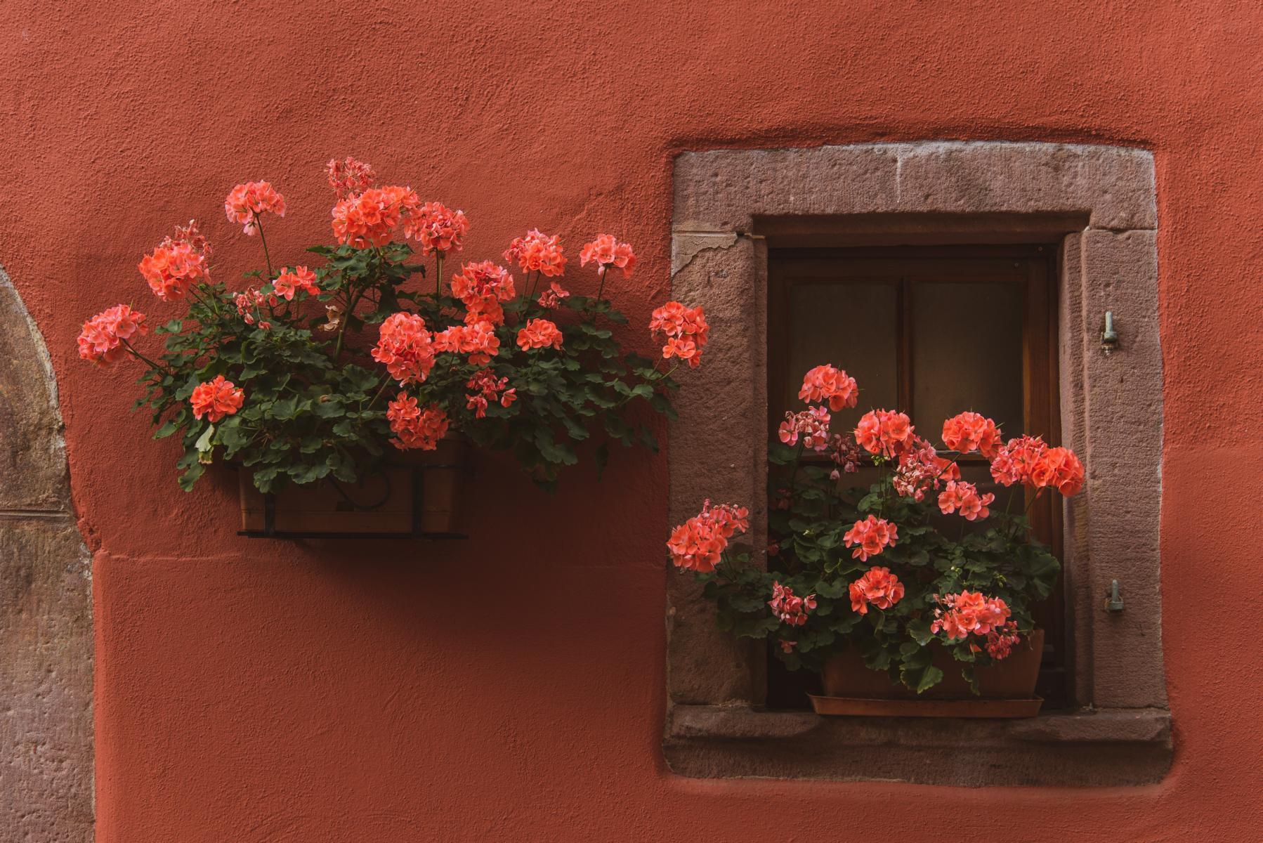 Riquewihr Alsace Elsass Straßburg Reise Blog | unephotodeceline